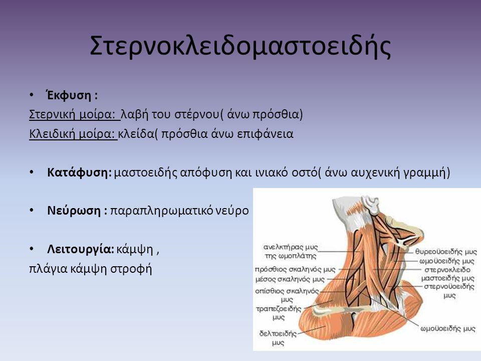 Στερνοκλειδομαστοειδής