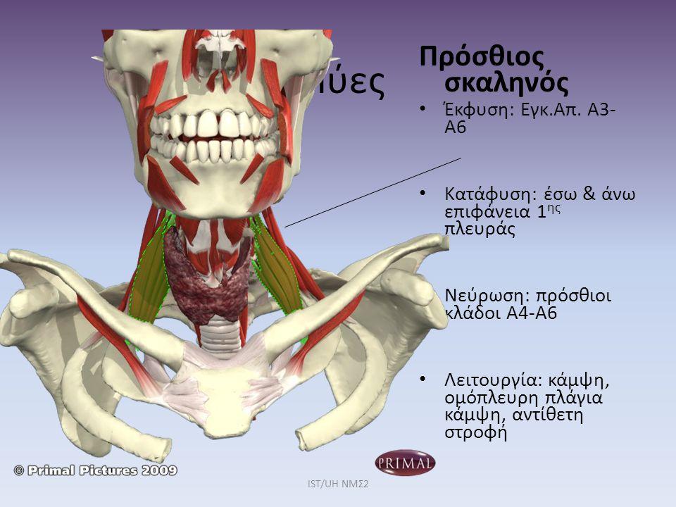 Μύες Πρόσθιος σκαληνός Έκφυση: Εγκ.Απ. Α3-Α6