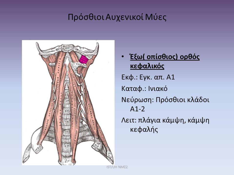 Πρόσθιοι Αυχενικοί Μύες