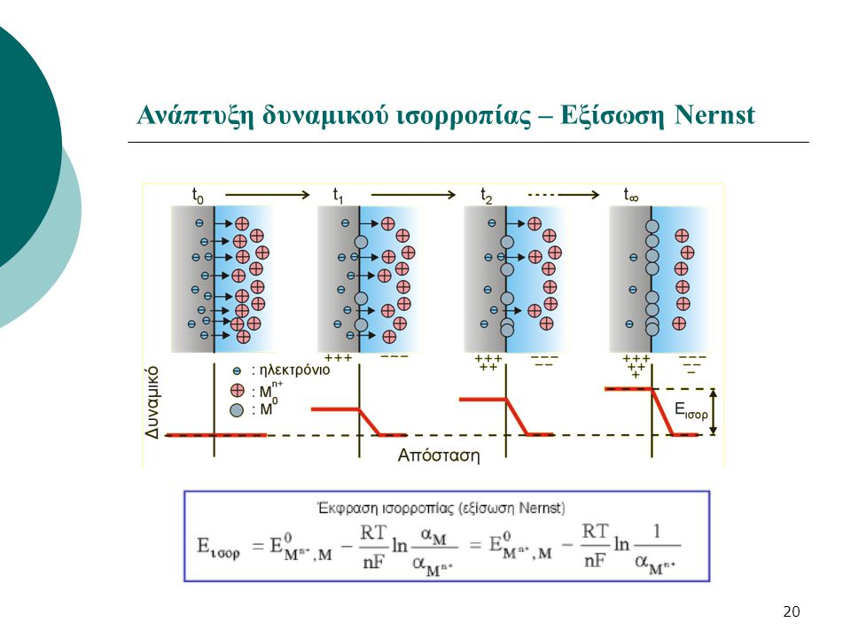 Ανάπτυξη δυναμικού ισορροπίας – Εξίσωση Nernst