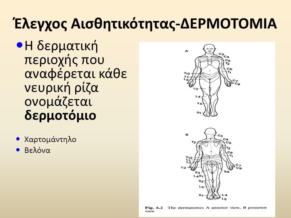 Έλεγχος Αισθητικότητας-ΔΕΡΜΟΤΟΜΙΑ