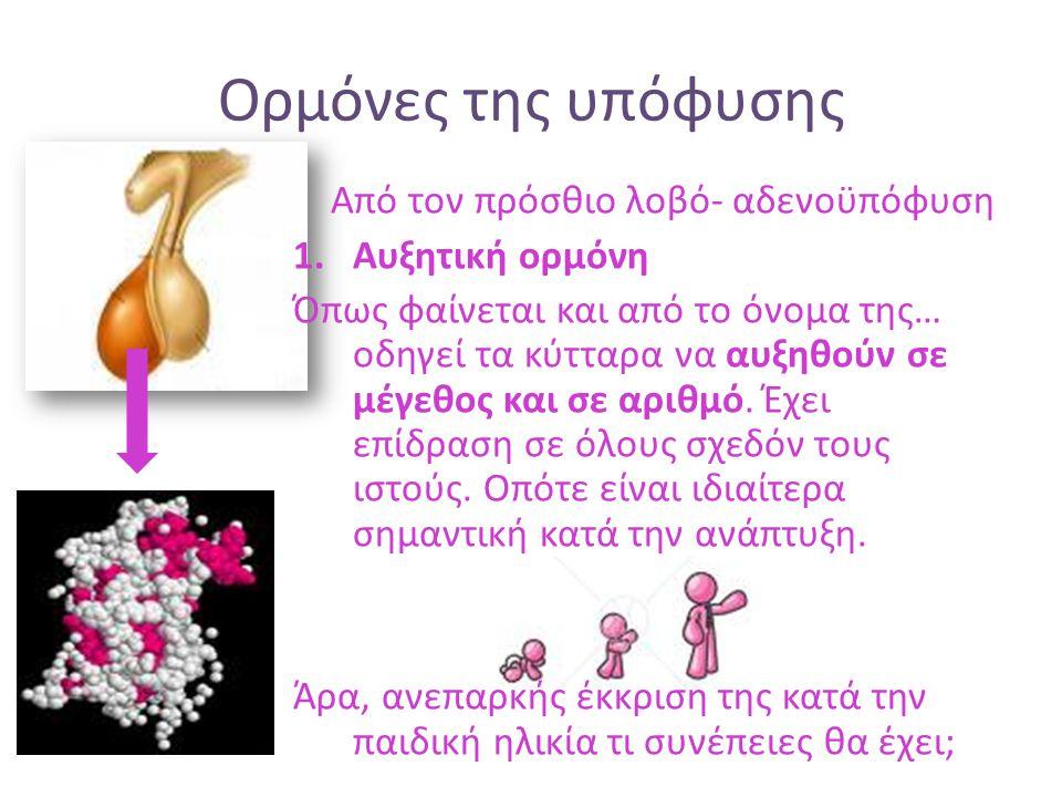 Ορμόνες της υπόφυσης Από τον πρόσθιο λοβό- αδενοϋπόφυση