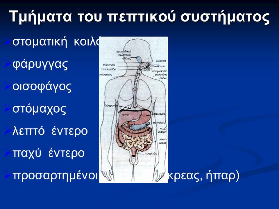 Τμήματα του πεπτικού συστήματος