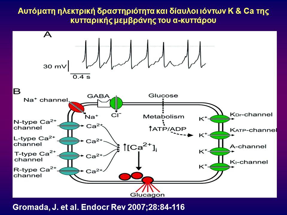 Αυτόματη ηλεκτρική δραστηριότητα και δίαυλοι ιόντων K & Ca της κυτταρικής μεμβράνης του α-κυττάρου