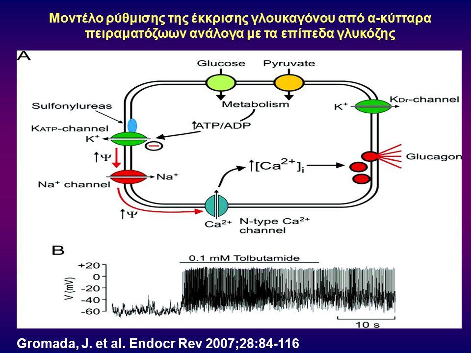Μοντέλο ρύθμισης της έκκρισης γλουκαγόνου από α-κύτταρα πειραματόζωων ανάλογα με τα επίπεδα γλυκόζης