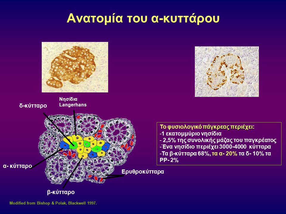 Ανατομία του α-κυττάρου