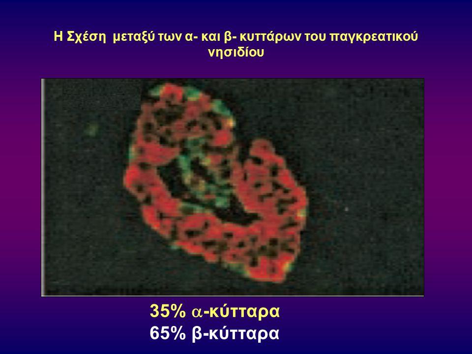 Η Σχέση μεταξύ των α- και β- κυττάρων του παγκρεατικού νησιδίου