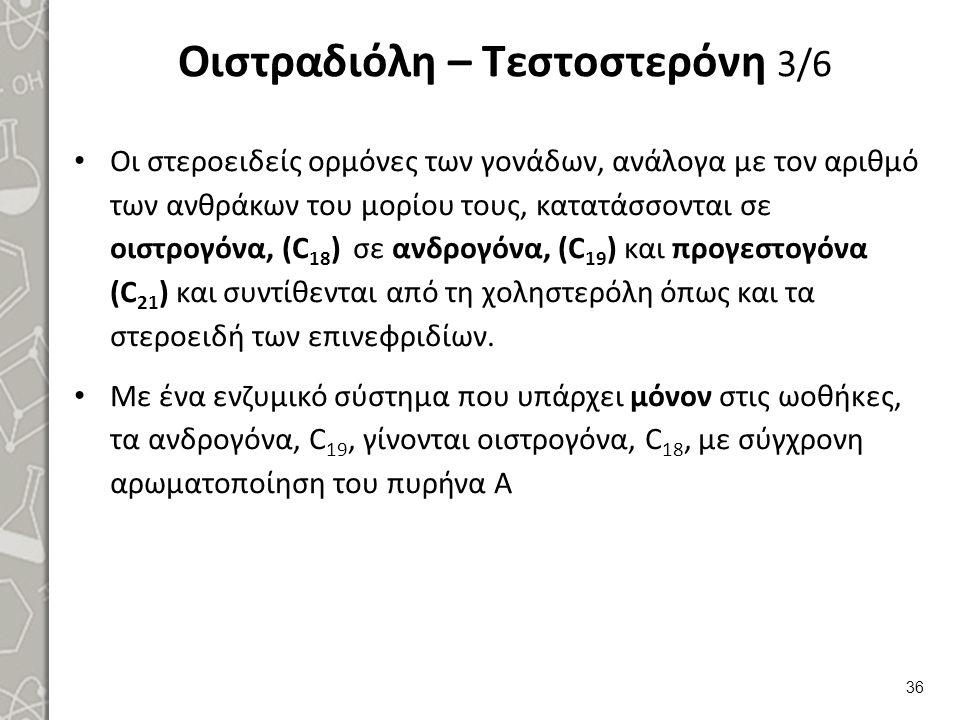 Οιστραδιόλη – Τεστοστερόνη 4/6