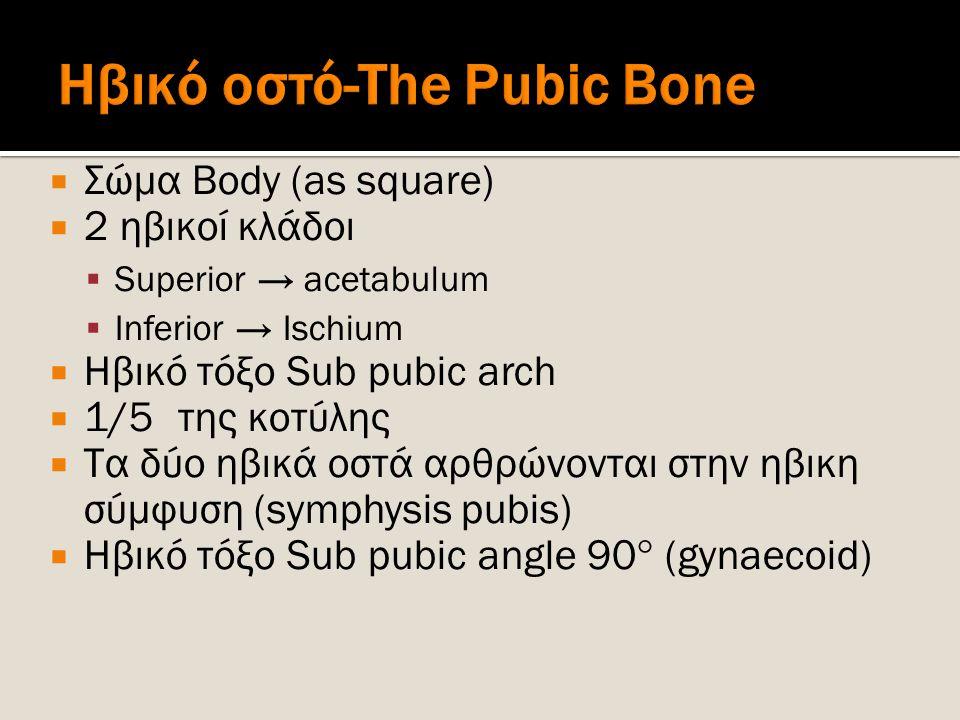 Ηβικό οστό-The Pubic Bone