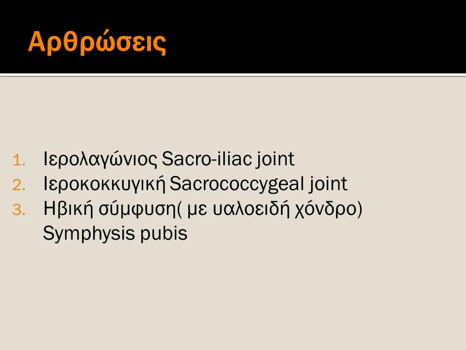 Αρθρώσεις Ιερολαγώνιος Sacro-iliac joint