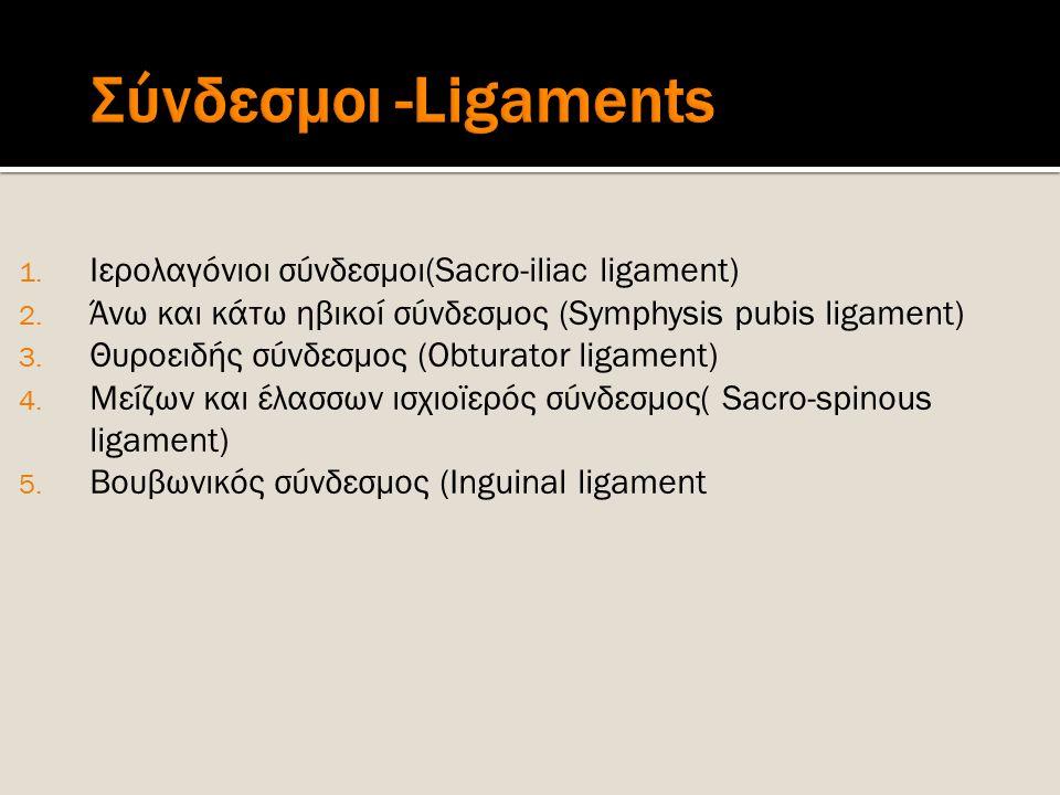 Σύνδεσμοι -Ligaments Ιερολαγόνιοι σύνδεσμοι(Sacro-iliac ligament)