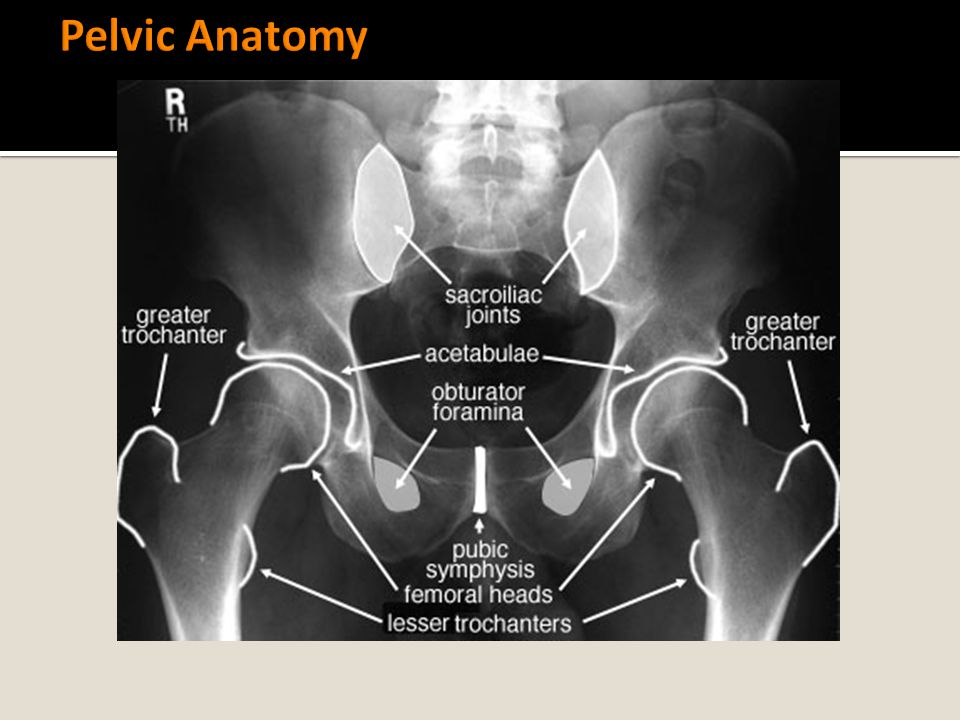 Pelvic Anatomy Symmetry is key to accurate analysis of the pelvic girdle.