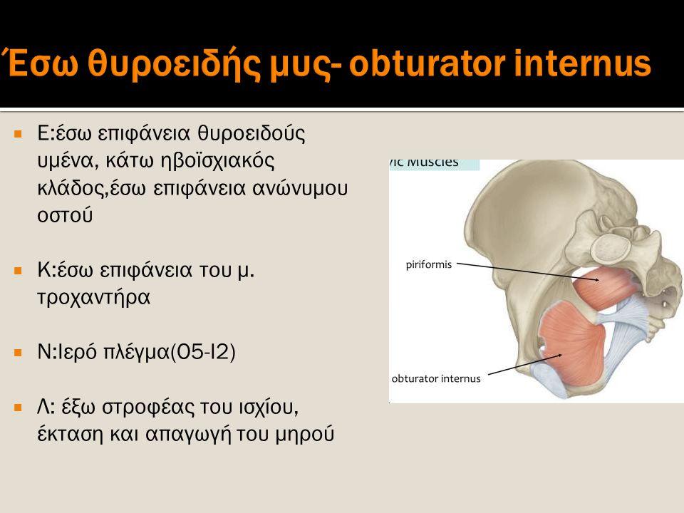 Έσω θυροειδής μυς- obturator internus