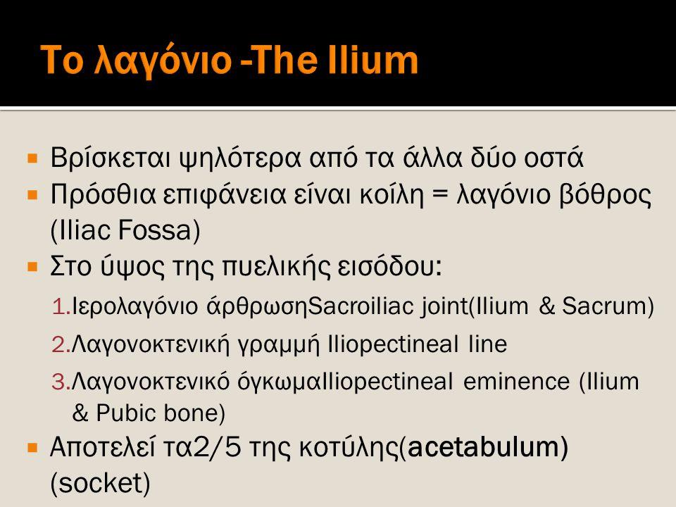 Το λαγόνιο -The Ilium Βρίσκεται ψηλότερα από τα άλλα δύο οστά