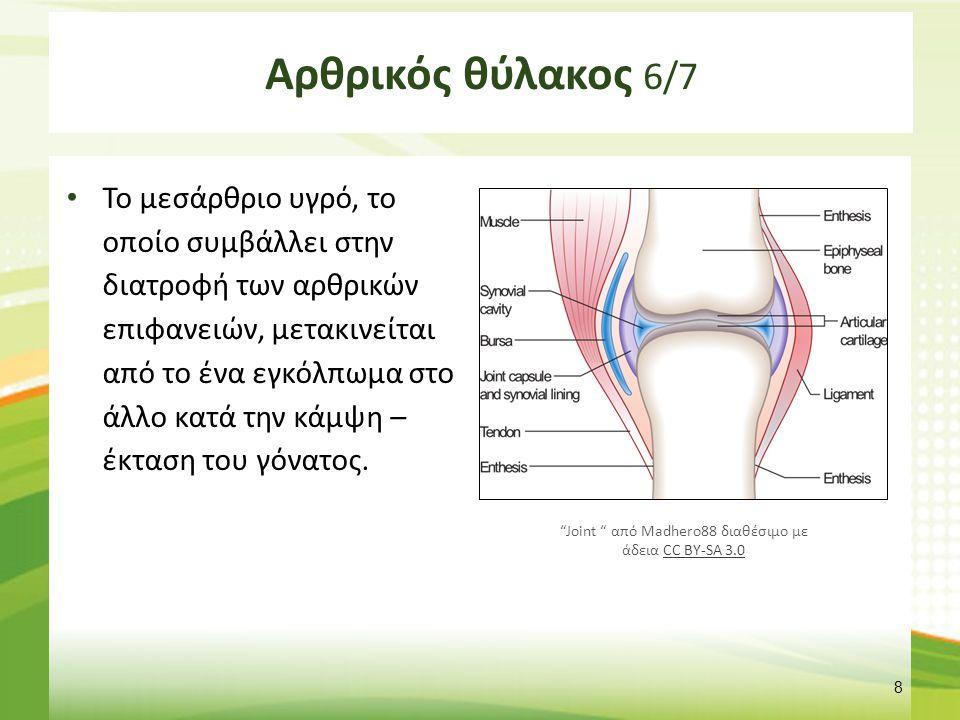Αρθρικός θύλακος 7/7 Joint capsule Femur Tibia α. Extension β. Flexion
