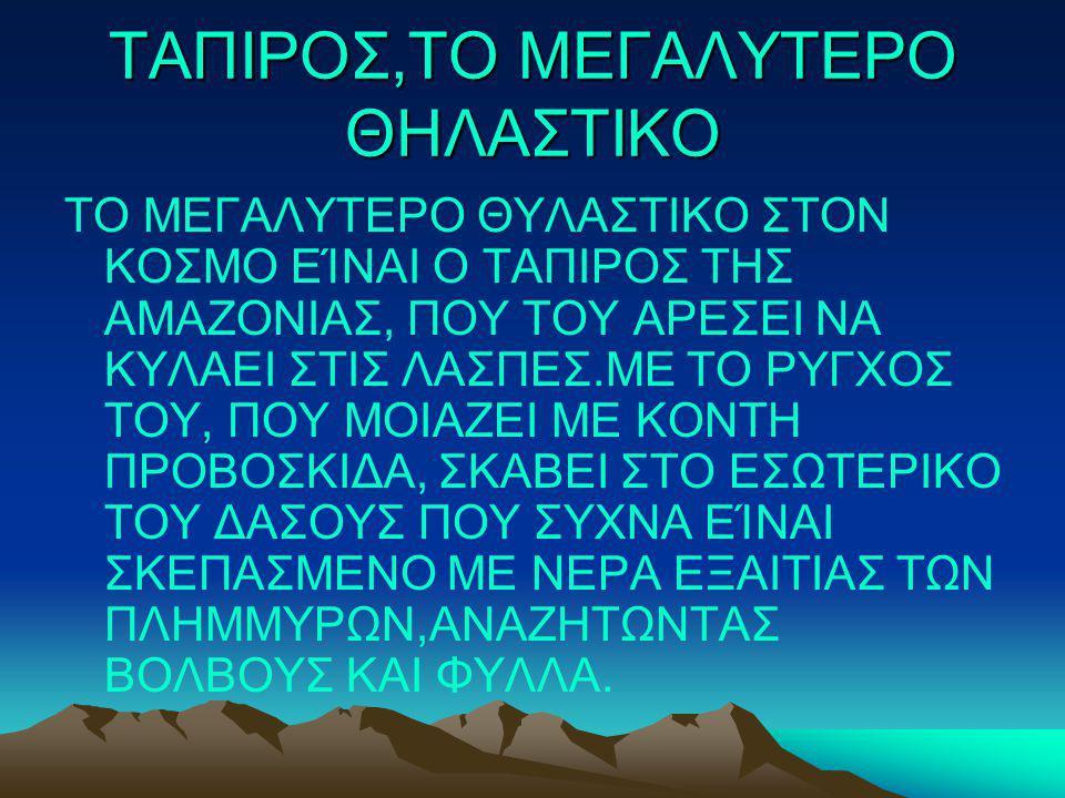 ΤΑΠΙΡΟΣ,ΤΟ ΜΕΓΑΛΥΤΕΡΟ ΘΗΛΑΣΤΙΚΟ