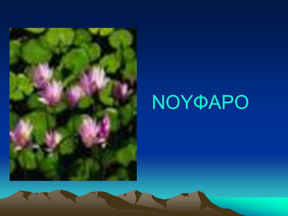 ΝΟΥΦΑΡΟ