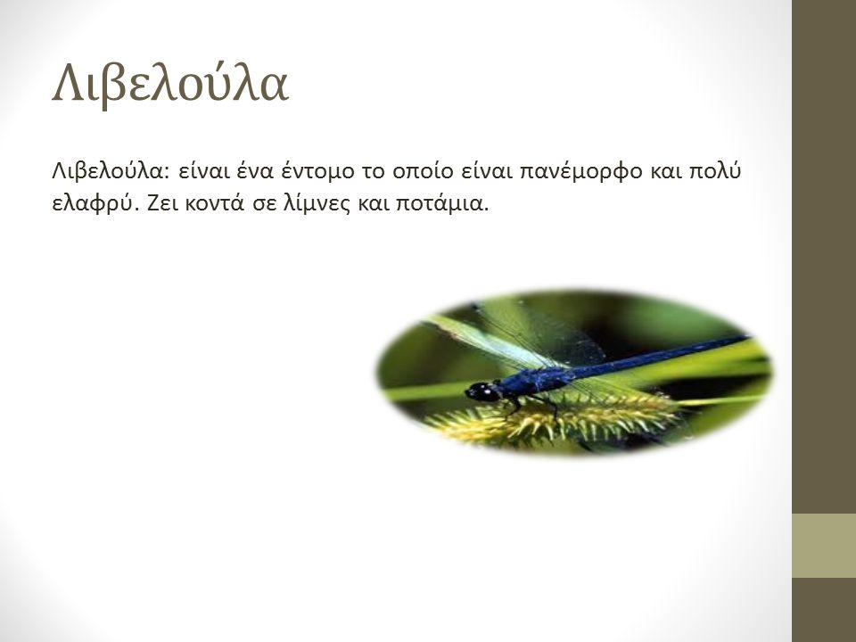Λιβελούλα Λιβελούλα: είναι ένα έντομο το οποίο είναι πανέμορφο και πολύ ελαφρύ.