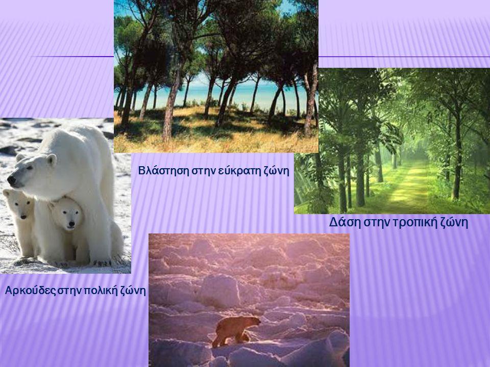 Δάση στην τροπική ζώνη Βλάστηση στην εύκρατη ζώνη