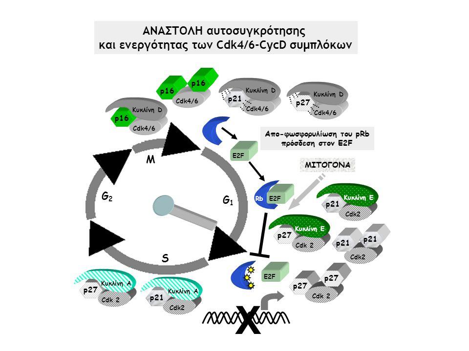 ΑΝΑΣΤΟΛΗ αυτοσυγκρότησης και ενεργότητας των Cdk4/6-CycD συμπλόκων
