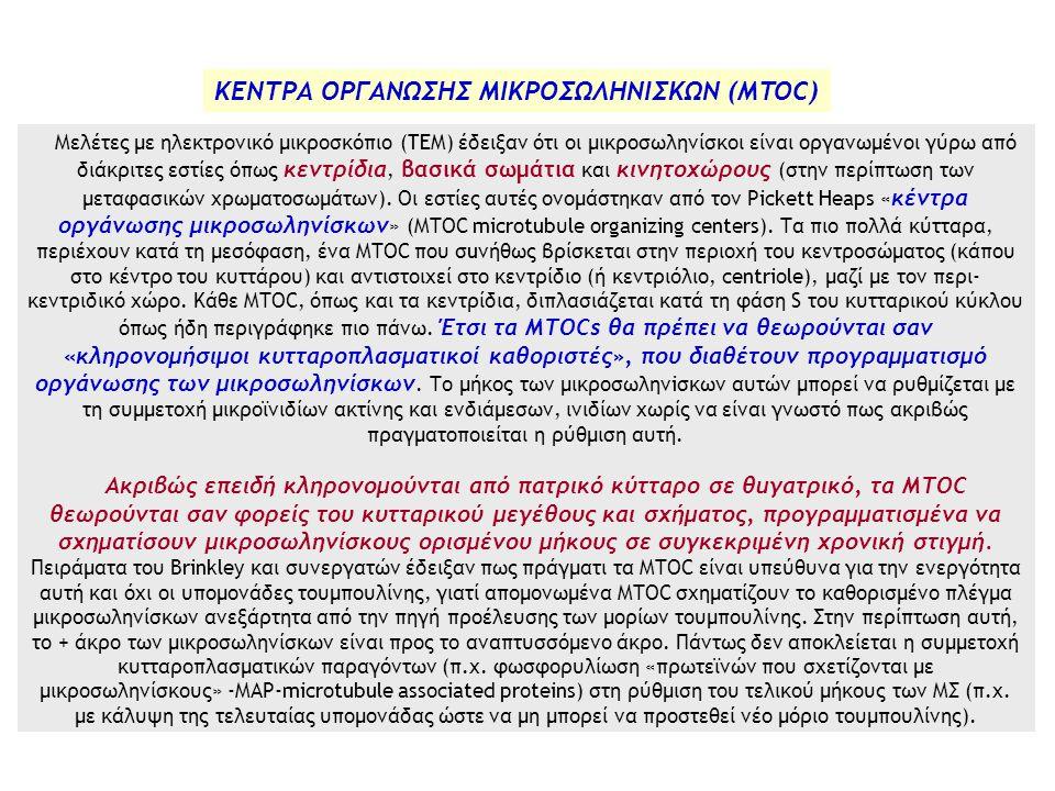 ΚΕΝΤΡΑ ΟΡΓΑΝΩΣΗΣ ΜΙΚΡΟΣΩΛΗΝΙΣΚΩΝ (MTOC)
