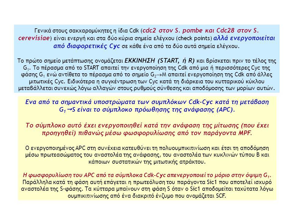 Γενικά στους σακχαρομύκητες η ίδια Cdk (cdc2 στον S