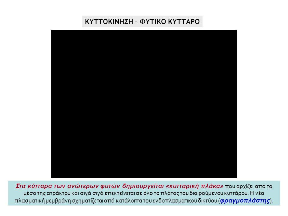ΚΥΤΤΟΚΙΝΗΣΗ – ΦΥΤΙΚΟ ΚΥΤΤΑΡΟ