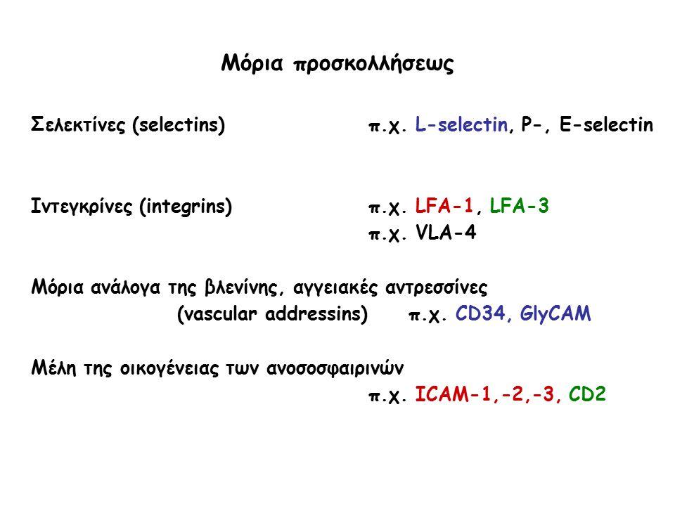 Μόρια προσκολλήσεως Σελεκτίνες (selectins) π.χ. L-selectin, P-, Ε-selectin. Ιντεγκρίνες (integrins) π.χ. LFA-1, LFA-3.