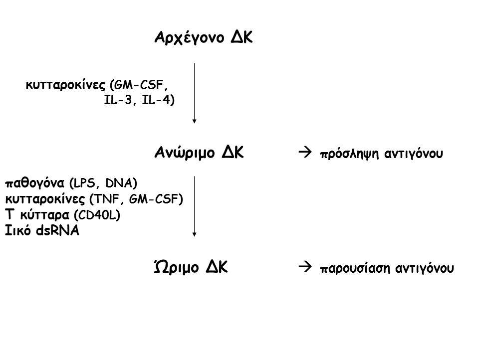 Ανώριμο ΔΚ  πρόσληψη αντιγόνου