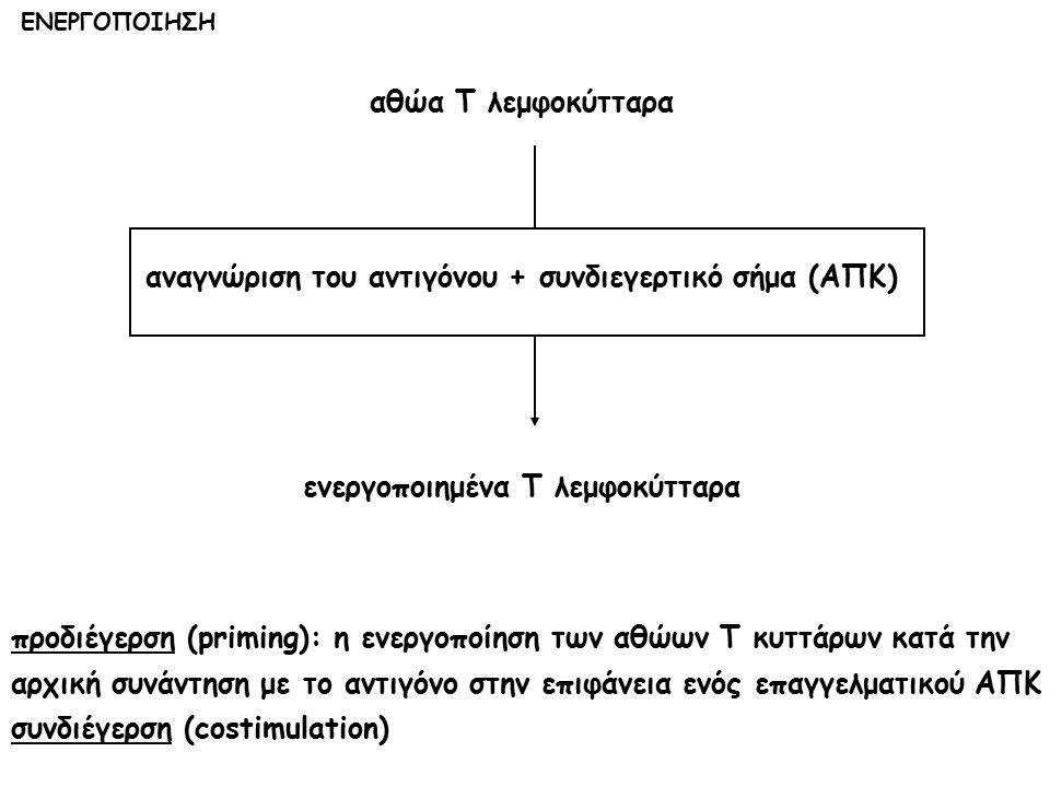 αναγνώριση του αντιγόνου + συνδιεγερτικό σήμα (ΑΠΚ)