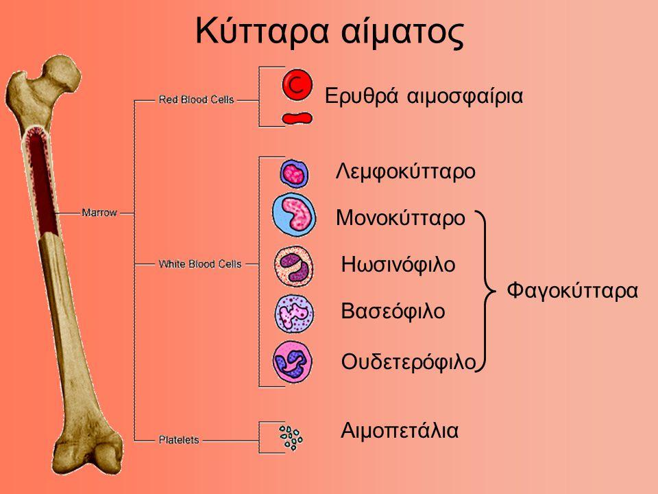 Κύτταρα αίματος Ερυθρά αιμοσφαίρια Λεμφοκύτταρο Μονοκύτταρο Ηωσινόφιλο