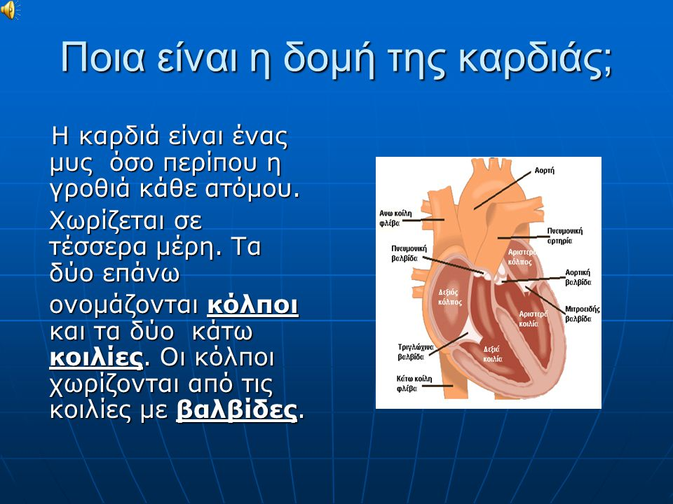 Ποια είναι η δομή της καρδιάς;