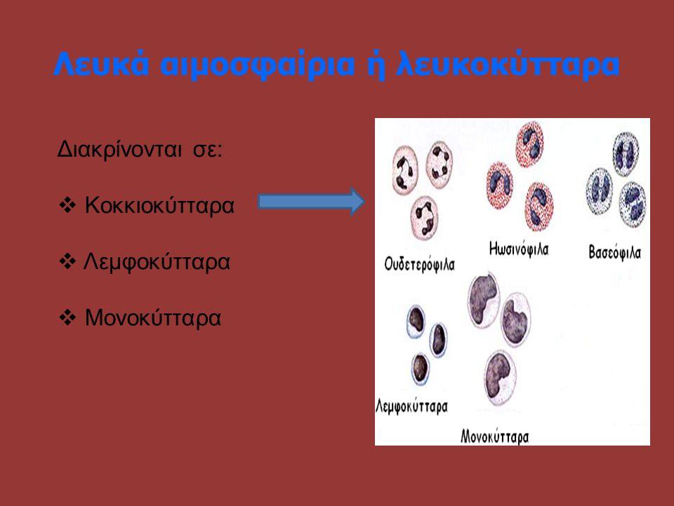 Λευκά αιμοσφαίρια ή λευκοκύτταρα