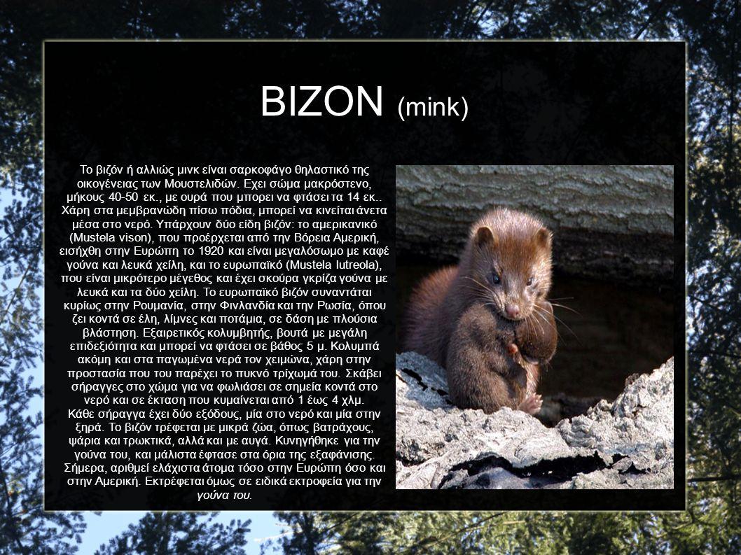 ΒΙΖΟΝ (mink)