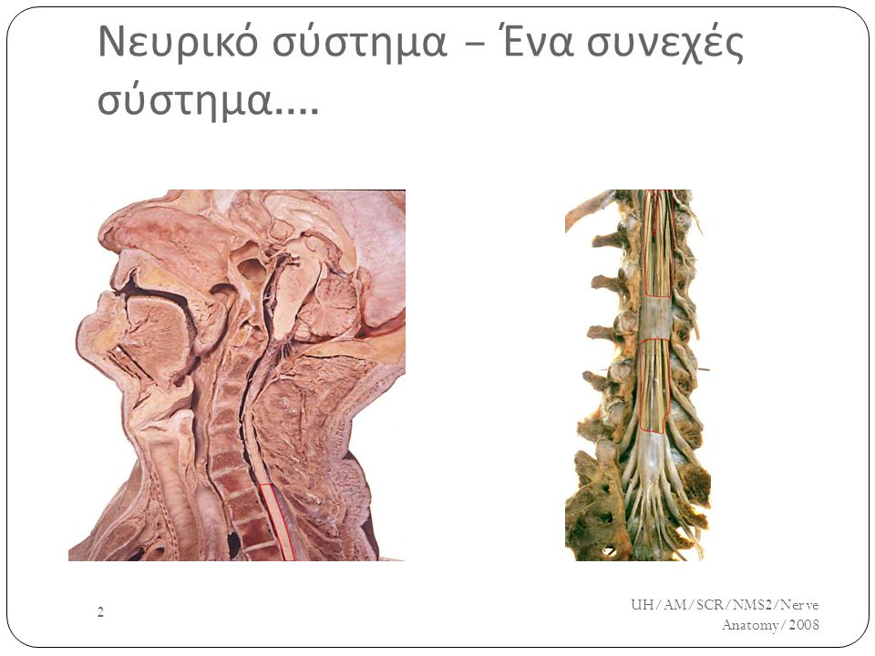 Νευρικό σύστημα – Ένα συνεχές σύστημα….