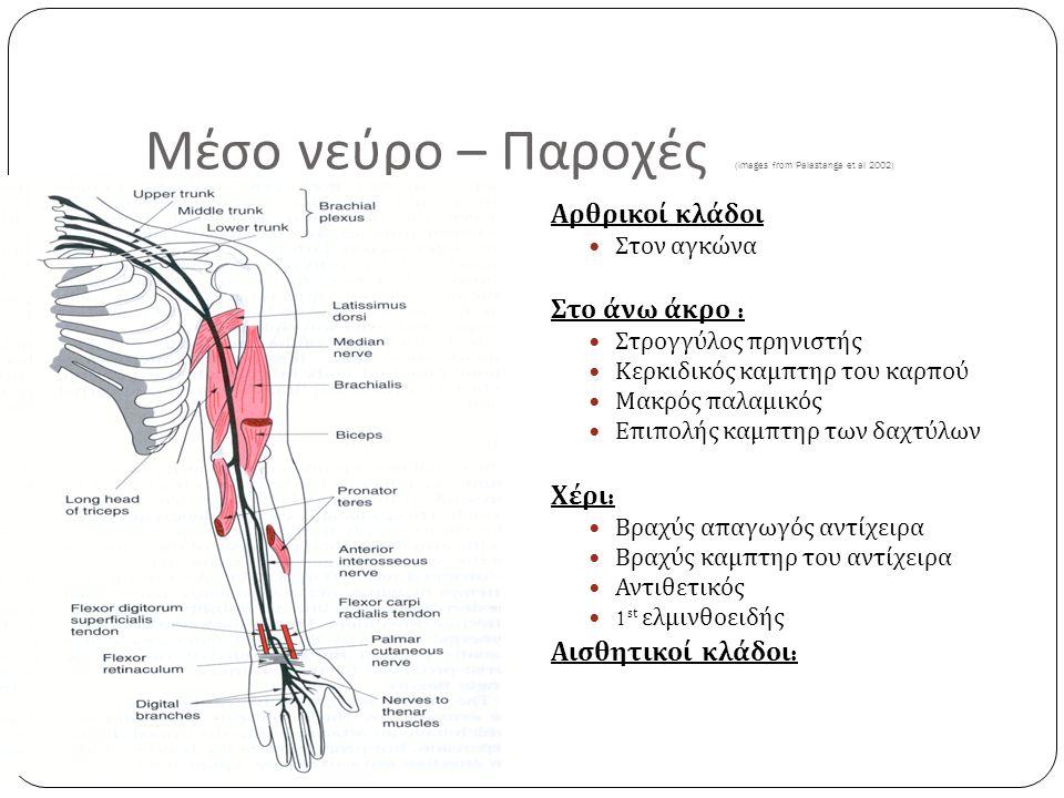 Μέσο νεύρο – Παροχές (images from Palastanga et al 2002)