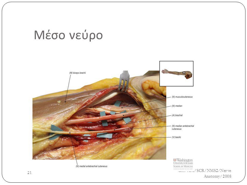 Μέσο νεύρο UH/AM/SCR/NMS2/Nerve Anatomy/2008