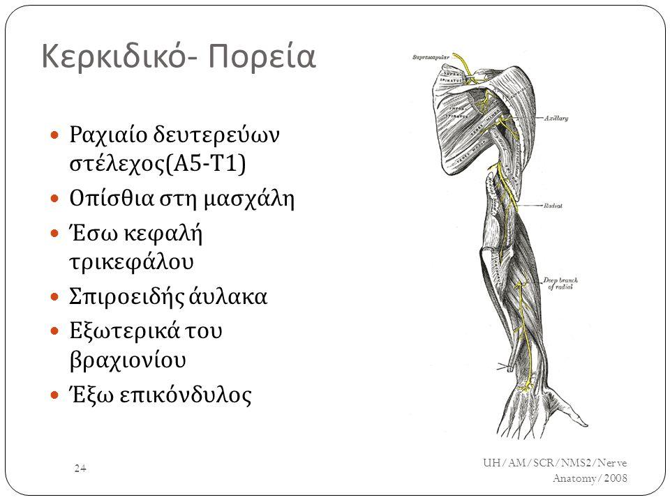 Κερκιδικό- Πορεία Ραχιαίο δευτερεύων στέλεχος(Α5-Τ1)