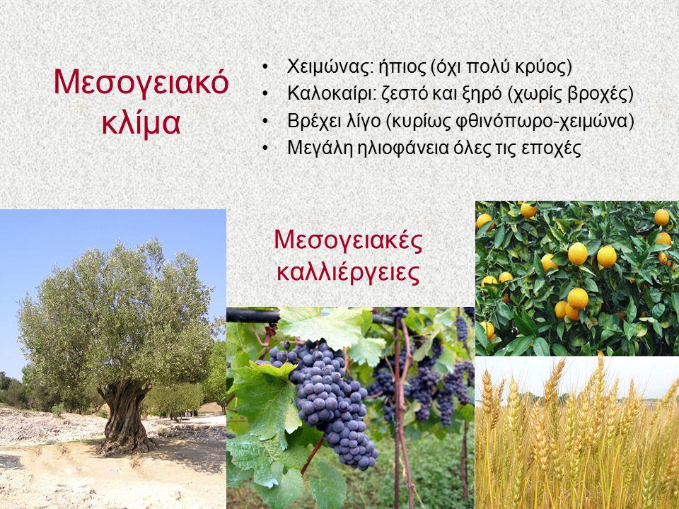 Μεσογειακές καλλιέργειες
