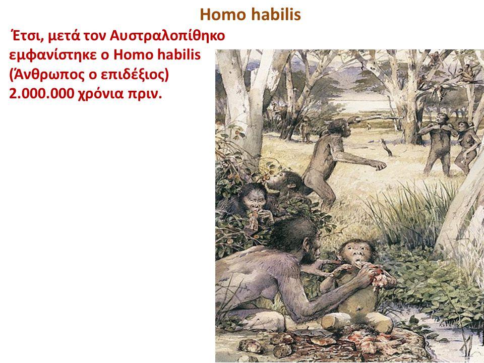 Homo habilis Έτσι, μετά τον Αυστραλοπίθηκο εμφανίστηκε ο Homo habilis