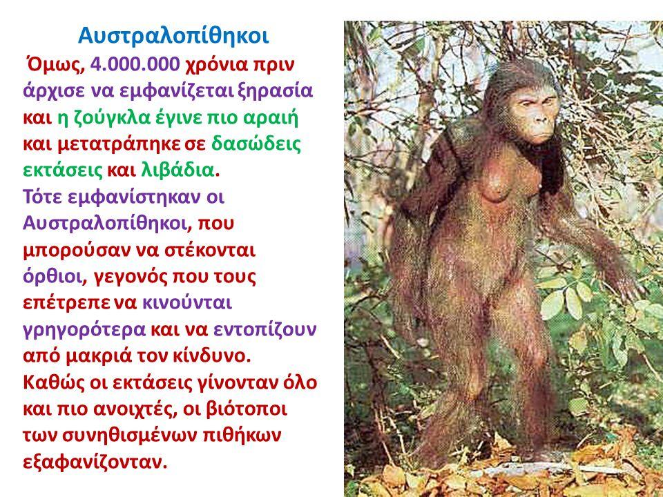 Αυστραλοπίθηκοι