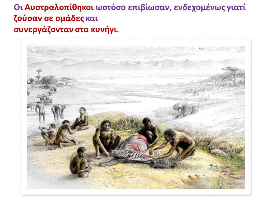 Οι Αυστραλοπίθηκοι ωστόσο επιβίωσαν, ενδεχομένως γιατί