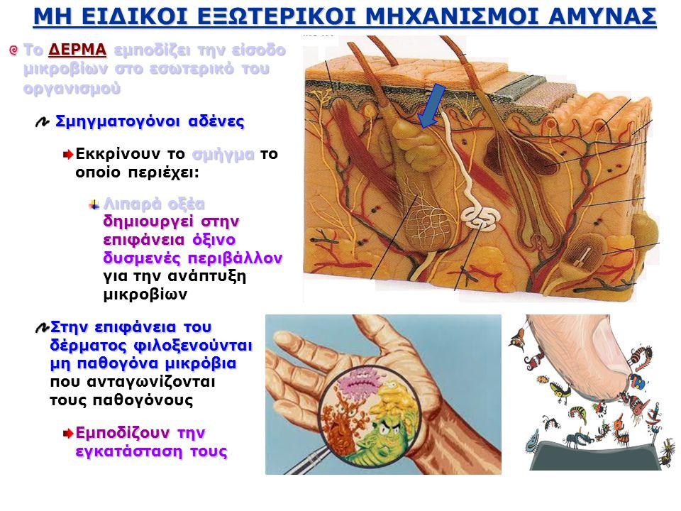 MH EIΔIKOI EΞΩTEΡIKOI ΜΗΧΑΝΙΣΜΟΙ ΑΜΥΝΑΣ