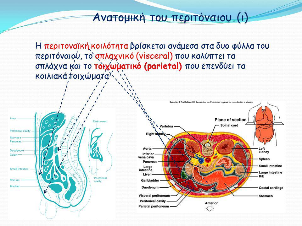 Ανατομική του περιτόναιου (ι)