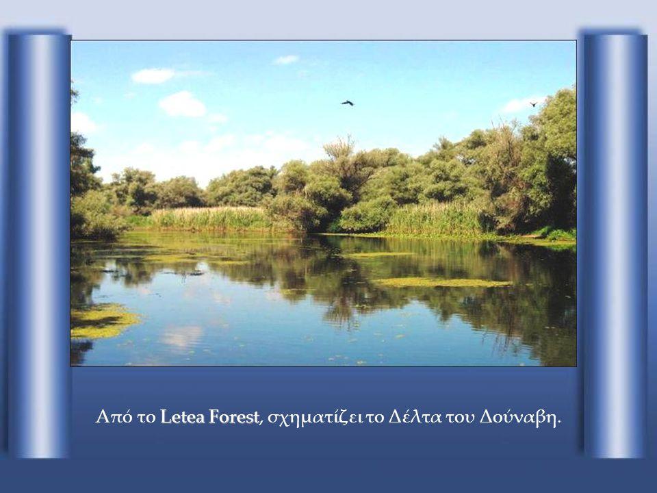 Από το Letea Forest, σχηματίζει το Δέλτα του Δούναβη.