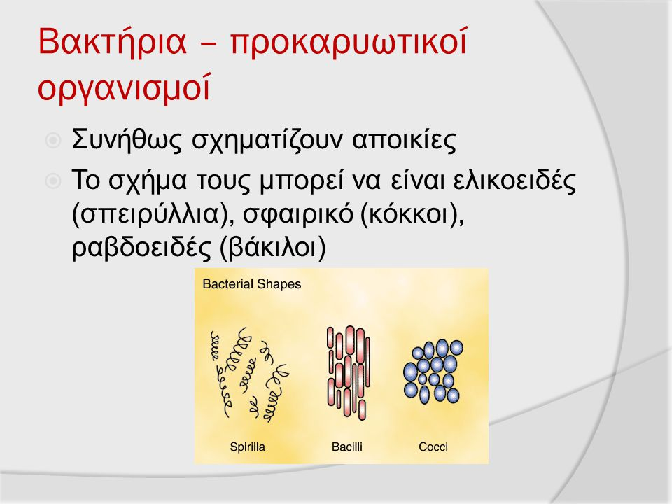Βακτήρια – προκαρυωτικοί οργανισμοί