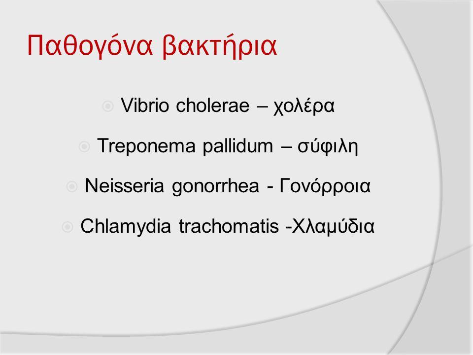 Παθογόνα βακτήρια Vibrio cholerae – χολέρα Treponema pallidum – σύφιλη