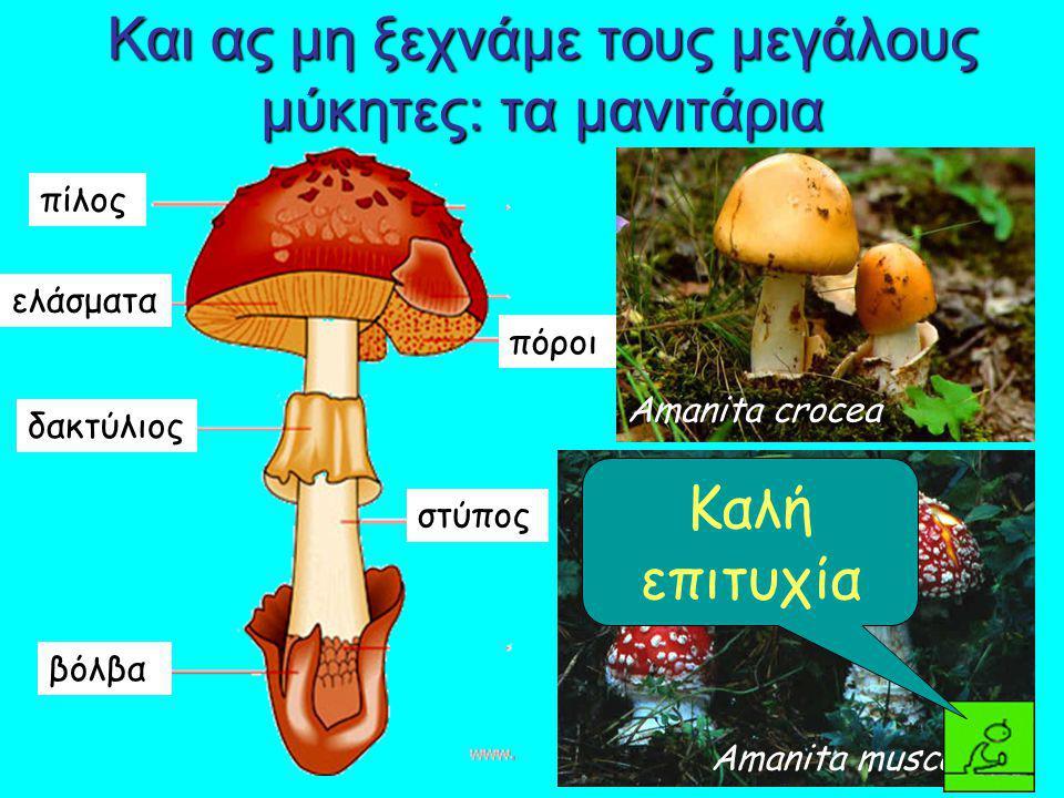 Και ας μη ξεχνάμε τους μεγάλους μύκητες: τα μανιτάρια