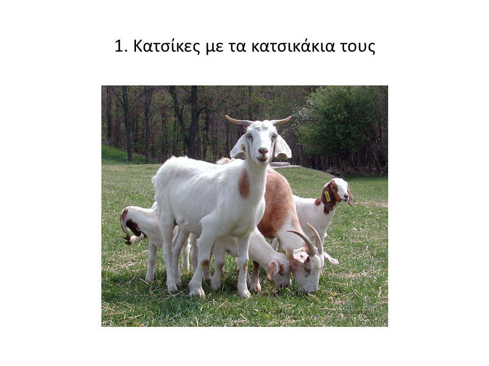 1. Κατσίκες με τα κατσικάκια τους