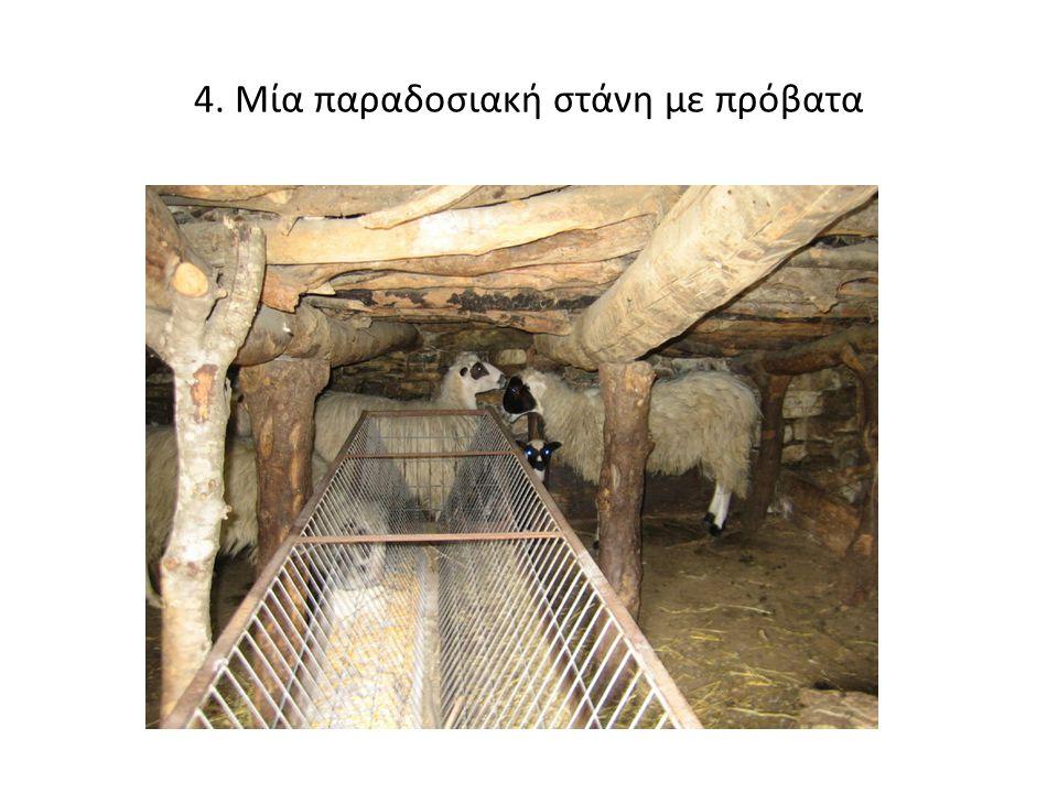 4. Μία παραδοσιακή στάνη με πρόβατα